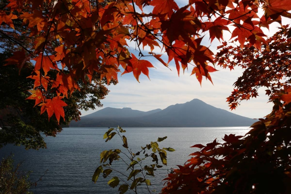 Autumn leaves in Lake Shikotsu